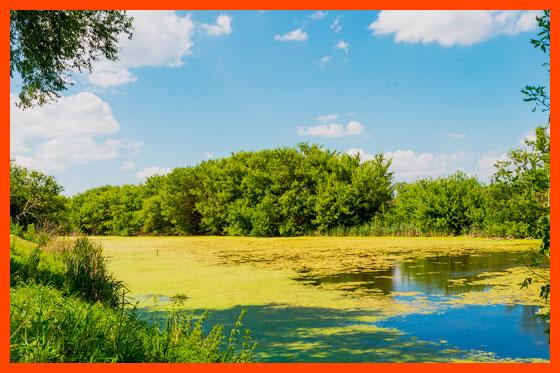 природа Саратовской области